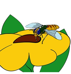 Bee on yellow flower vector