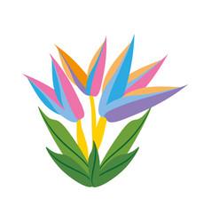 Bird paradise flower spring vector