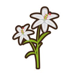 cartoon crocus flower petal leaf vector image