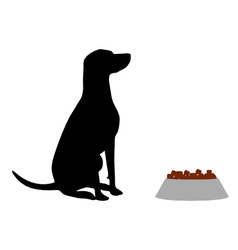 Dog feeding vector