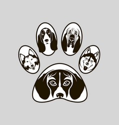 dog footprint image vector image