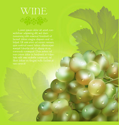 Green grapes bunch with dew drops vector