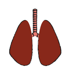 Lungs organ icon vector