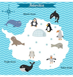 Map antarctica continent with different animals vector