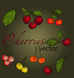 set of cherries of different colors with leaves vector image