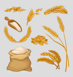 set of icons with golden wheat ears dried grains vector image