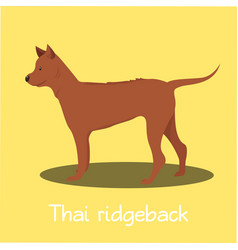 An depicting thai ridgeback dog cartoon vector