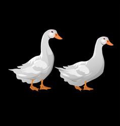 domestic white ducks vector image