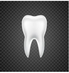 isolated tooth dental realistic white vector image