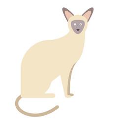 Siamese cat flat on white vector