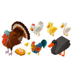 3d design for different types of farm birds vector image