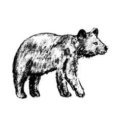 bear icon grunge style vector image