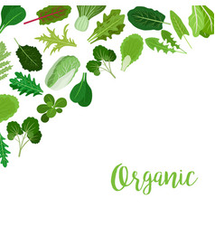 Organic banner with salad leaves vector