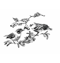 Black and white watercolor of bird on vector image vector image