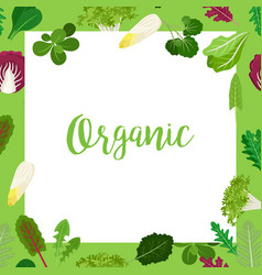 organic banner with leaves square frame vector image