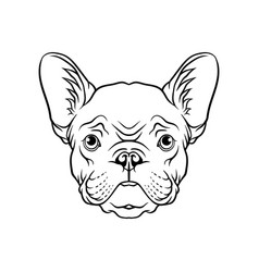 black and white sketch of pug dogs head face of vector image