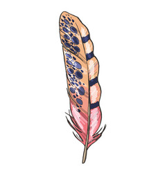 Colorful detailed beige and pink bird feather vector