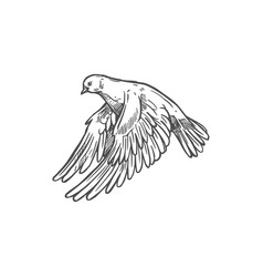 dove bird pigeon peace and love sketch symbol vector image