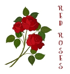 Flowers bouquet red roses vector