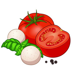 Fresh red tomato with mozzarella basil and pepper vector