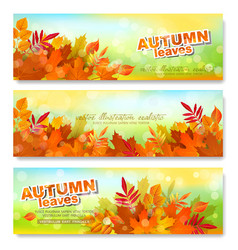 Set banner template with autumn colorful vector