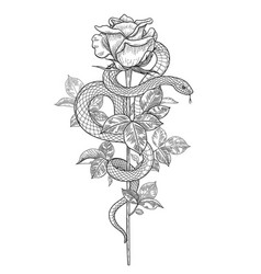 Twisted snake and rose bud vector