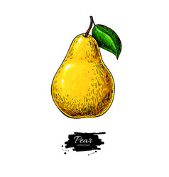 pear drawing isolated hand drawn object on vector image vector image