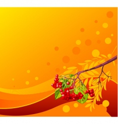 mountain ash branch background vector image