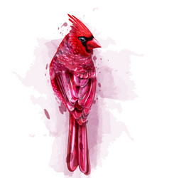 cardinal red bird watercolor isolated on vector image