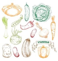 Colored sketched vegetables for agriculture design vector image