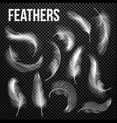 feathers set different falling white vector image