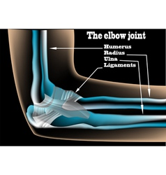 The elbow joint vector image