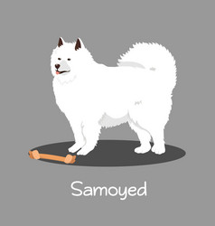 An depicting samoyed dog cartoon vector
