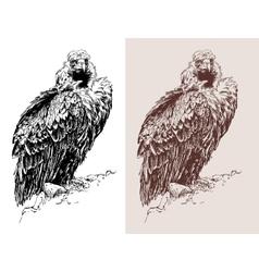 Artwork of griffon vulture Aegypius monachus vector