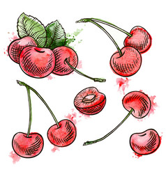 Hand drawn red cherries vector