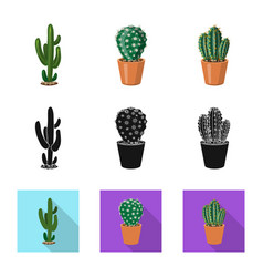 isolated object of cactus and pot sign collection vector image