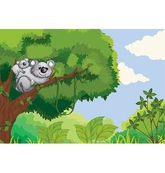 Koalas vector image