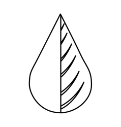 Water drop and leaf plant vector
