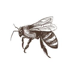 Hand drawn bee vector