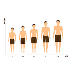 Height and age measurement growth from boy to vector