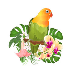 parrot agapornis lovebird tropical bird vector image