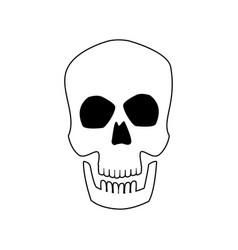 skull human head bone medicine concept vector image