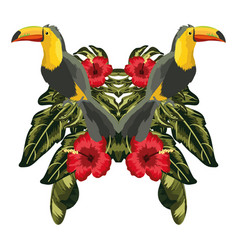 Tucans exotic and tropical birds vector