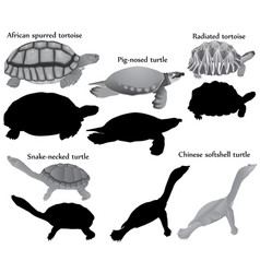 Turtles silhouette collection vector