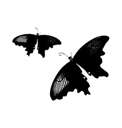 A pair of black butterflies vector image vector image