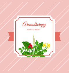 Aromatherapy medical herbs label vector