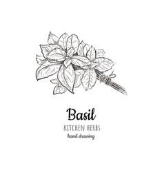 Basil vector