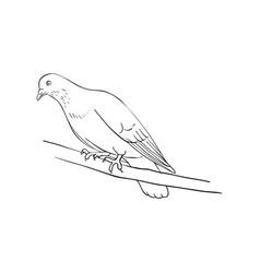 bird at tree branch vector image
