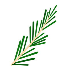Green rosemary twig icon isolated vector