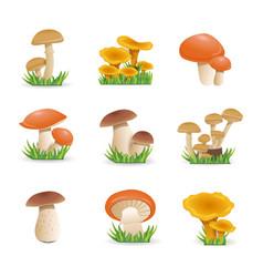 Set mushrooms edible mushrooms vector